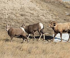 Wildlife Prairie Park